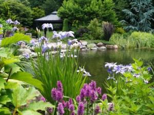 daves-garden